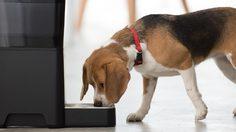 ไป ตจว. หลายวัน ห่วงสัตว์เลี้ยงที่บ้าน Petnet SmartFeeder เครื่องนี้ช่วยคุณได้!