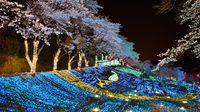 ไม่ไปถือว่าพลาด! 5 เทศกาลประดับไฟในประเทศญี่ปุ่น