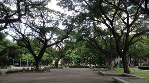 """""""ต้นไม้ที่พ่อปลูก"""" รัชกาลที่ ๙ พระราชทานต้นจามจุรีให้กับจุฬาฯ เมื่อ ๕๔ ปีที่แล้ว"""