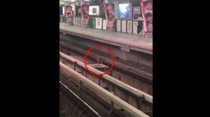 ขึ้นไปได้ไง  จนท.ช่วยน้องหมา หลังหนีการจับตกไปรางรถไฟฟ้า BTS
