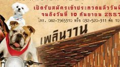 งานประกวดสุนัข Dog Festival @เพลินวาน