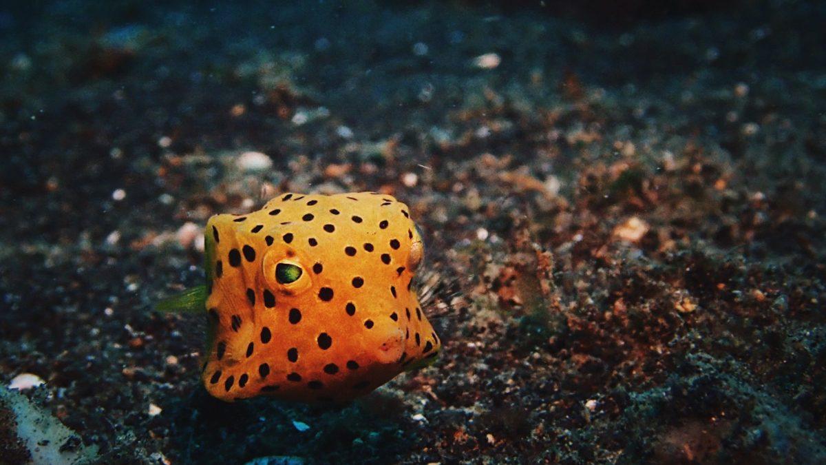 ทิปท่องเที่ยว : วิธีเตรียมกล้องถ่ายใต้น้ำให้ได้รูปสวยๆ