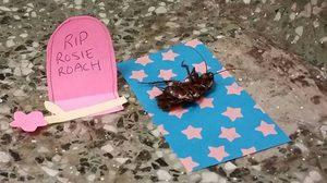 OMG! มีแบบนี้ด้วย นักศึกษามหาวิทยาลัยเทกซัส ร่วมกันไว้อาลัยแมลงสาบ