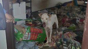 หดหู่ ! สุนัขถูกขังไว้ในบ้านเกือบ 2 สัปดาห์ ร้องโหยหวนให้คนช่วย