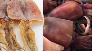 แปลงร่าง!! จากปลาหมึกแห้ง กลายเป็น ปลาหมึกสด