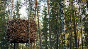โรงแรมรังนก สุดอำพราง กลางป่าสวีเดน