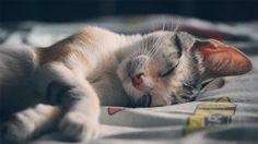 5 เคล็ดลับ ที่จะทำให้คุณหลับเต็มอิ่ม