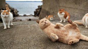 เที่ยวเกาะแมว อาโอชิมะ สวรรค์คนรักน้องเหมียว