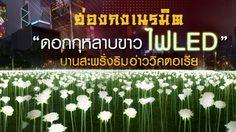 """ฮ่องกงเนรมิต """"ดอกกุหลาบขาว ไฟ LED""""กว่า 25,000 ดอก บานสะพรั่งริมอ่าววิคตอเรีย"""