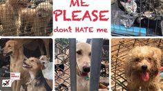 หมา-แมว ถูกทิ้งจำนวนมาก หลังสถานการณ์ระบาดของโรคพิษสุนัขบ้า