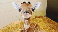 มาดู 16 สัตว์สุดน่ารัก ที่สามารถใช้รอยยิ้มครองโลกได้เลยทีเดียว!