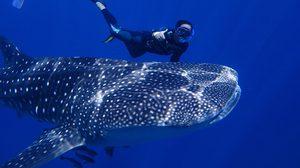 'ฉลามวาฬ' โผล่เล่นน้ำกับนักท่องเที่ยว ที่ เกาะร้านเป็ด ร้านไก่