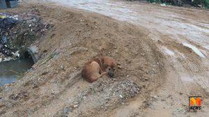 สุดสงสาร 'เจ้าเฉย' สุนัขโกลเด้นพันธุ์ผสม นอนตากฝนริมถนนรอเจ้าของรับกลับบ้าน