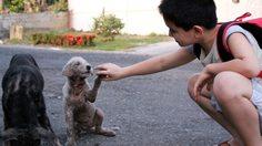 เด็กชาย 8 ขวบ ออกจากบ้านทุกวัน พ่อตามไป จนรู้ว่าเขาไปดูแลสุนัขจรจัด