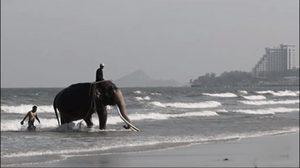 หาชมยาก คุณพระเศวตฯ เล่นน้ำทะเล หาดหน้าพระราชวังไกลกังวล