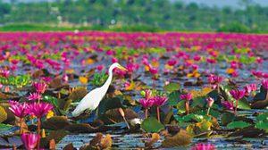 ทะเลน้อย … ลุ่มน้ำจืดไซส์มหึมา แห่งเมืองพัทลุง