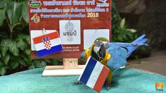 'นกแก้วมาคอร์' แสนรู้สวนสัตว์เปิดเขาเขียว ทายแชมป์ฟุตบอลโลก 2018
