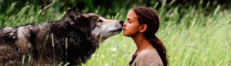 Wolf Summer หมาป่าเพื่อนรัก