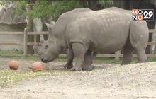 สวนสัตว์ในสหรัฐฯ จัดฉลองฮาโลวีนล่วงหน้า