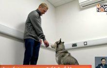 สุนัขดมกลิ่นสามารถถูกสอนหาระเบิดที่ซับซ้อนขึ้นได้