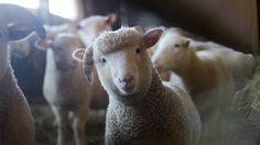 คำศัพท์ภาษาอังกฤษ 20 ชนิดสัตว์ ตอนเด็ก-ตอนโต