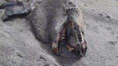 ปลาประหลาดนอนเกยตื้น ชายหาดนิวซีแลนด์