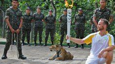 สลด!! ยิงดับเสือจากัวร์ หลังมาโชว์งานวิ่งคบเพลิงโอลิมปิกส์ 2016