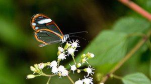 อุทยานแห่งชาติมานู ความหลากหลายทางธรรมชาติมากที่สุด
