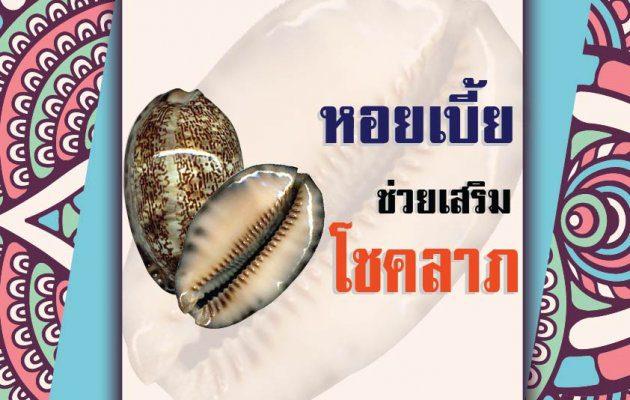 หอยเบี้ย กับความเชื่อป้องกันการเจ็บไข้ได้ป่วย เสริมโชคลาภ
