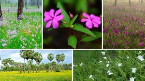 เที่ยวชม 5 ดอกไม้หน้าฝน ความงดงามในม่านหมอก