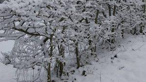 หิมะตกในสเปนครั้งแรกในรอบ 100 ปี