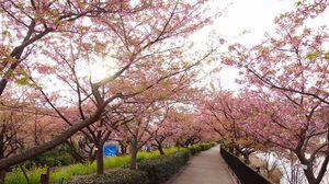 5 จุดชม ซากุระ บานหน้าหนาว ที่ญี่ปุ่น ต้องไปเมืองไหน มาเช็คกัน!