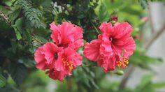 ชื่อเรียกดอกไม้ ไทย-ภาษาอังกฤษ