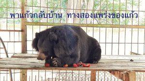 หนุ่มโพสต์ปลื้ม คนสนใจหมีควายกว่าหมีแพนด้า ชวนสร้างบ้านให้เจ้าหมีแก้วที่เขาค้อ
