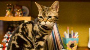 ไปเยือน คาเฟ่แมว Neko no JIkan ใกล้ชิดเหมียวน่ารักในเมืองโอซาก้า