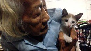 ยอดยายชรา สู้ความโดดเดี่ยว-ใจบุญ เปิดบ้านทำคอนโดแมวจรจัด
