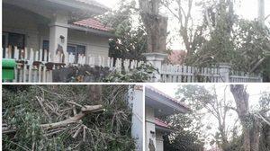 โวยการไฟฟ้าฯ ทำไม่ถูกต้อง บุกตัดต้นไม้ในบ้านโดยไม่ได้รับอนุญาต