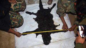 เผยแล้วผลตรวจ ซากเสือดำทุ่งใหญ่ พบมีรอยกระสุน 5 นัด ชี้ตั้งใจเข้าไปฆ่า