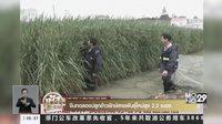 จีนปลูกข้าวยักษ์พันธุ์ใหม่สูงกว่าตัวคน