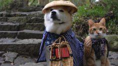 น่ารักมาก! คู่หูเพื่อนซี้ต่างสายพันธุ์ เจ้าตูบคิกุชิโย และ เจ้าเหมียวโทราจิโร่