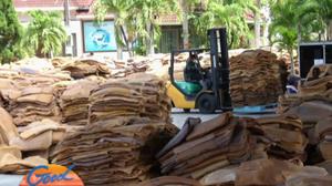 8 กระทรวง เตรียมสรุปงบซื้อ 'ยางพารา' ช่วยเหลือเกษตรกร
