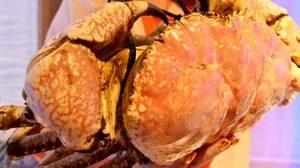 """""""ราชาปูยักษ์ราคาตัวละ 49,500 บาท"""" ที่ร้าน Louis Leeman Seafood"""