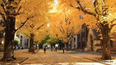 5 อันดับ สถานที่ชม ใบไม้เปลี่ยนสี ในโตเกียว ญี่ปุ่น
