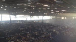 ไฟไหม้! ฟาร์มเลี้ยงไก่ 8,500 ตัวถูกย่างสด เสียหายกว่า 3 ล.