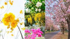 วิธีปลูก 8 พันธุ์ไม้ดอก งามๆ ดีต่อใจ ในช่วง หน้าร้อน