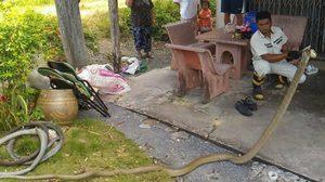 แทบช็อก!! หนุ่มเมืองคอนร้องกู้ภัยช่วย หลังจงอางยักษ์บุกบ้าน