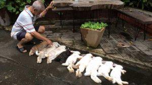 เจ้าของร้องสื่อ กระต่าย 9 ตัว ถูกสุนัขเพื่อนบ้านกัดตาย ไม่รับผิดชอบ