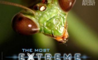 The Most Extreme Series สุดขีด! สัตว์พิศวง ปี 3