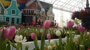 เทศกาลทิวลิปบาน ณ อุทยานไม้ดอก เพ ลา เพลิน