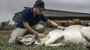 องค์กรพิทักษ์สัตว์แห่งโลก เผยผลสำเร็จช่วยสัตว์จากภัยพิบัติ